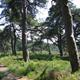 De Dellen dennen van Daendels © Geldersch Landschap & Kasteelen