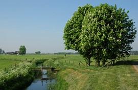 Landschap in Steenderen