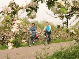 Fietsers op de appeldijk Foto Historische Kring West-Betuwe